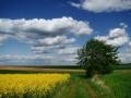 krajobraz-5