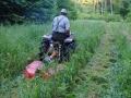 Pielęgnacja uprawy leśnej