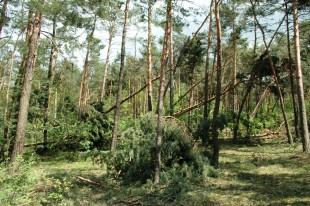 Metoda prognozowania wydajności maszynowego pozyskiwania drewna poklęskowego na podstawie cech uszkodzonej powierzchni leśnej